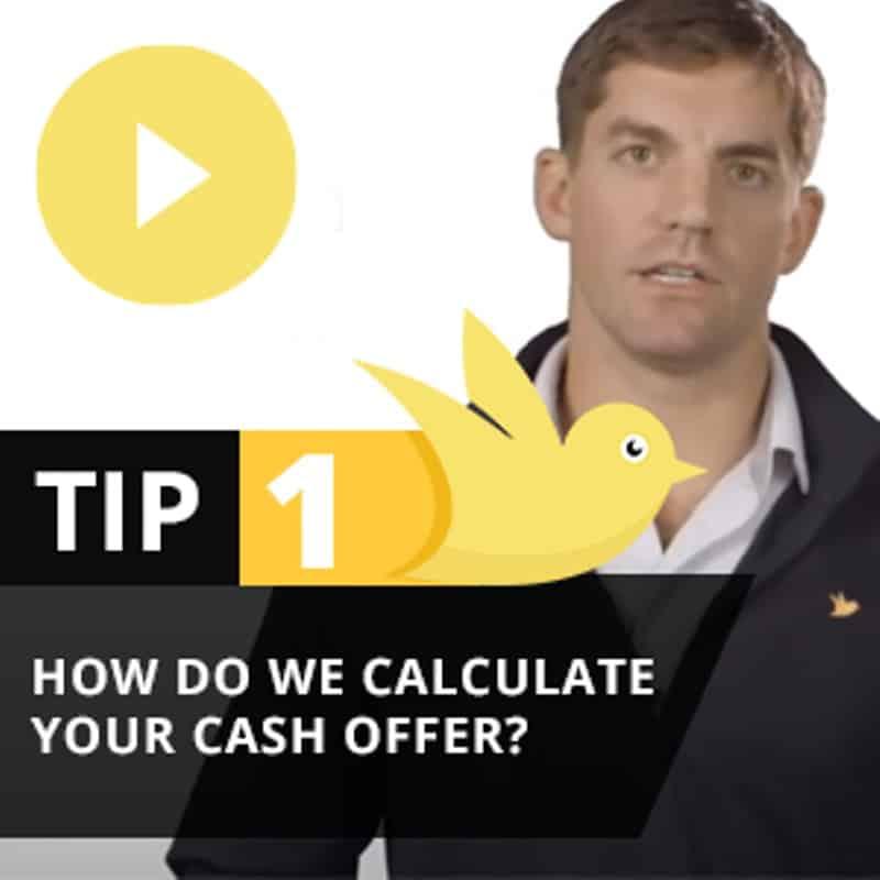 Yellow Bird Tip 1