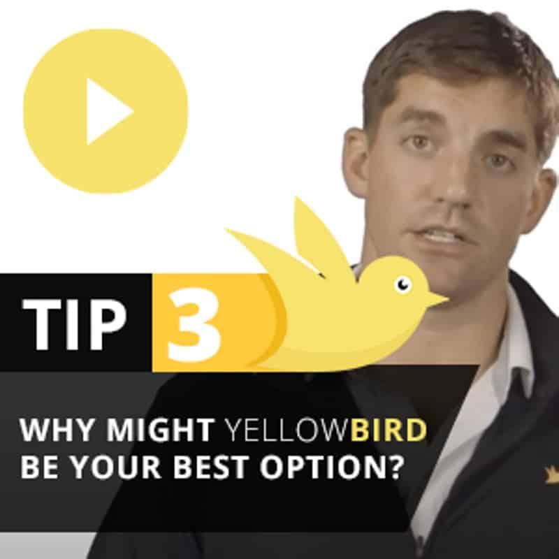 Yellow Bird Tip 3