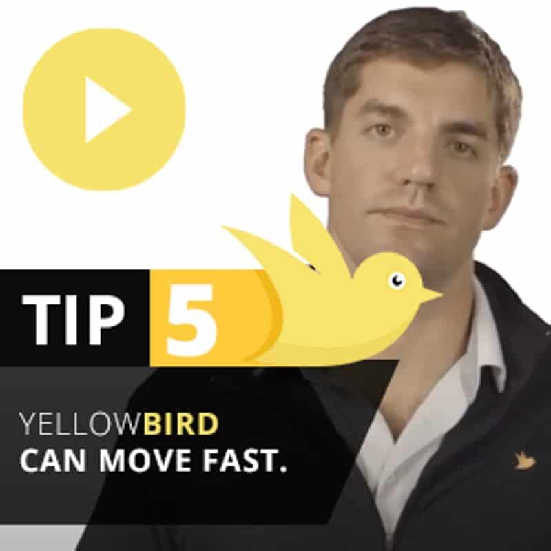 Yellow Bird Tip 5