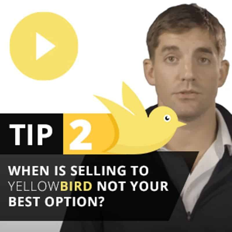 Yellow Bird Tip 2